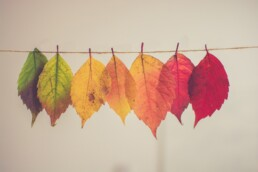 assorted-color lear hanging decor